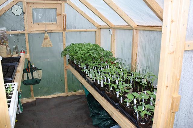 diy-greenhouse4
